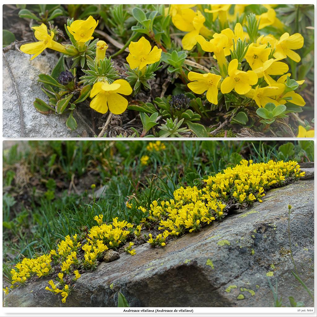 Retour sur 2018 et la flore alpine Avt10