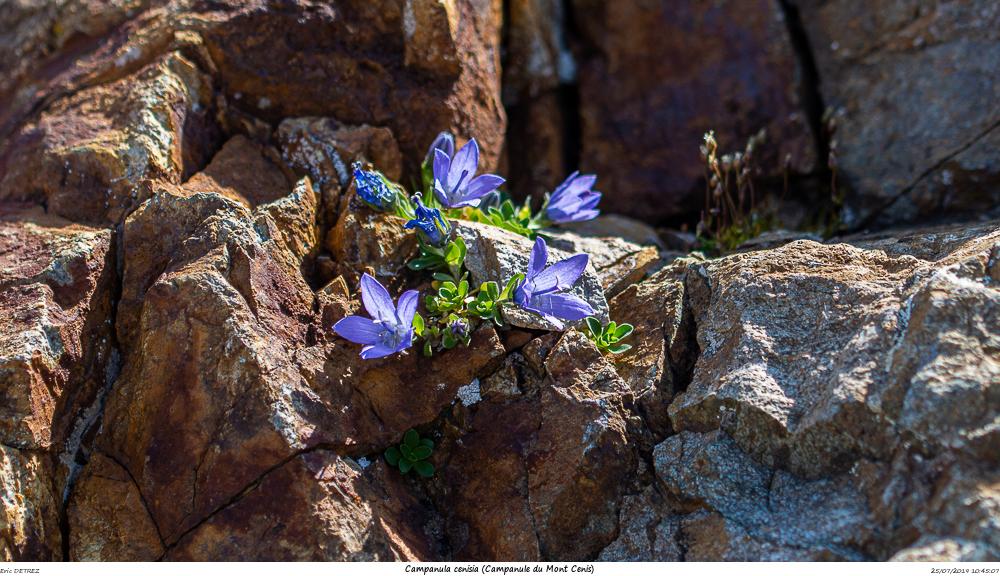 Huez entre flore et libellules Campan24