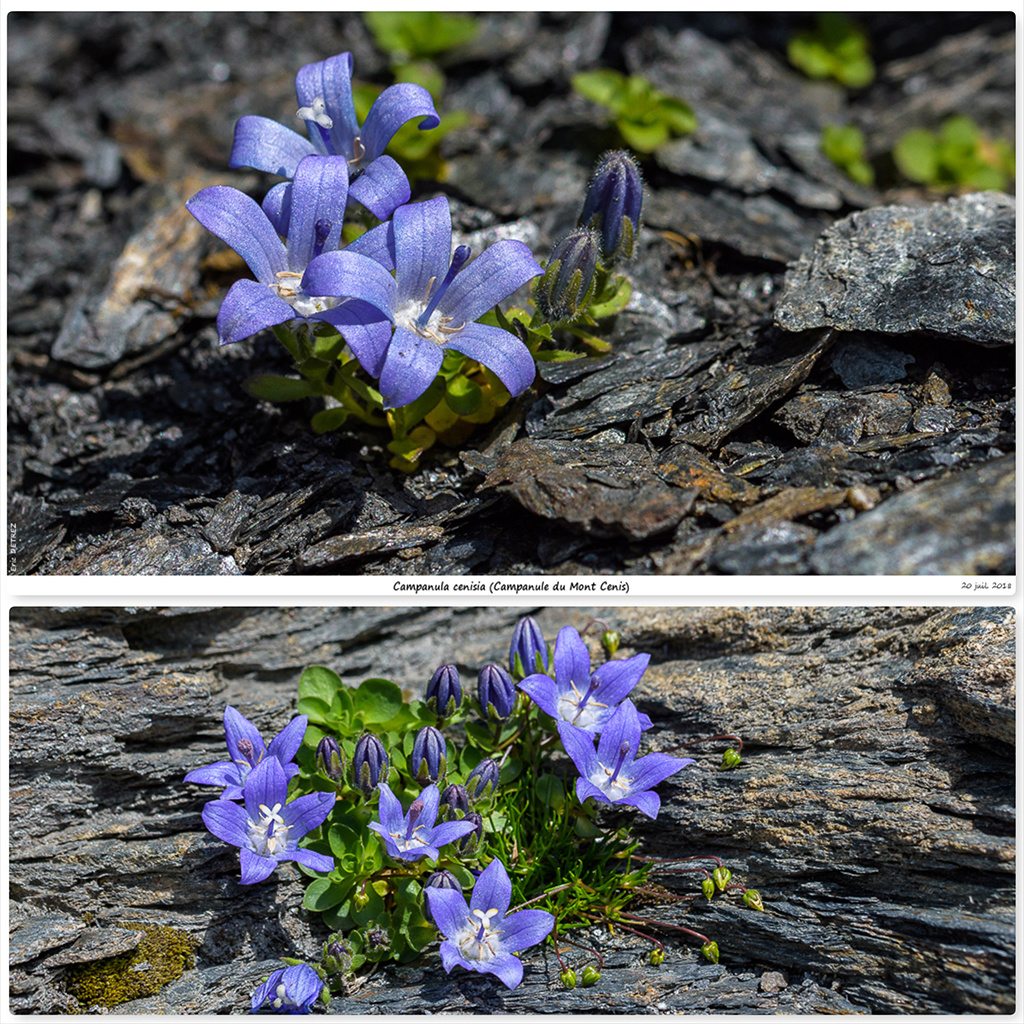 Retour sur 2018 et la flore alpine Cm10
