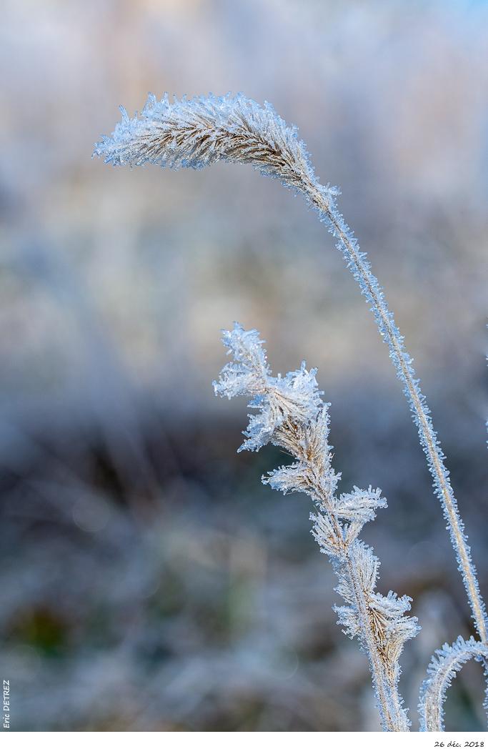 L'hiver est bien présent en Ardèche Dsc_2811