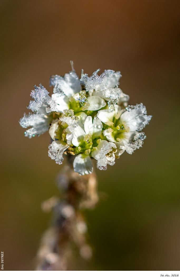 L'hiver est bien présent en Ardèche Dsc_2814