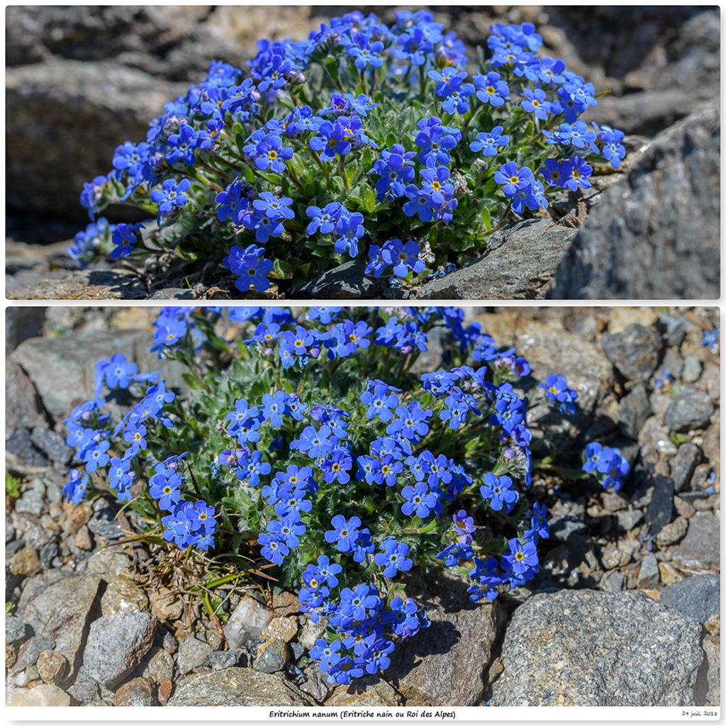 Retour sur 2018 et la flore alpine En11
