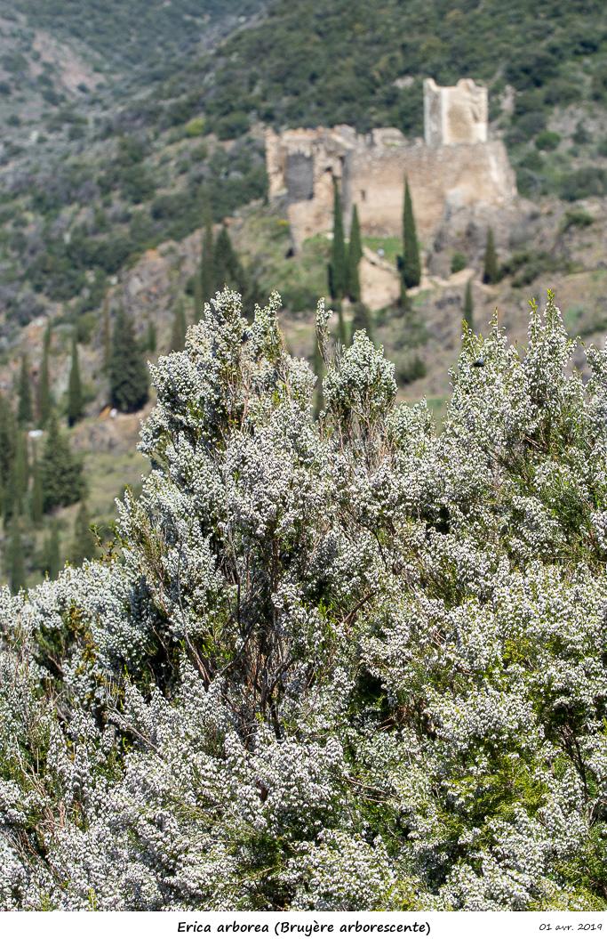 Aude et Ariège terres de contrastes Erica_10