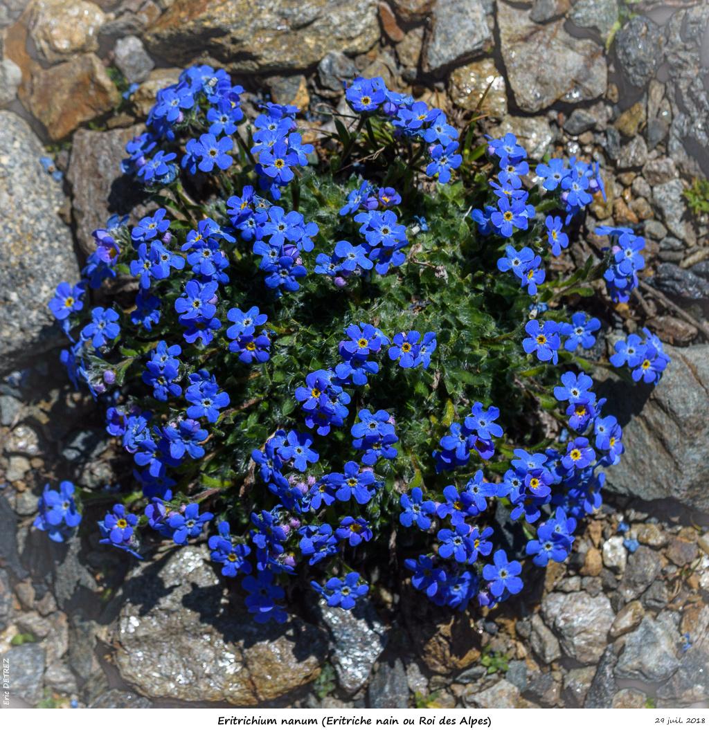 Retour sur 2018 et la flore alpine Eritri14