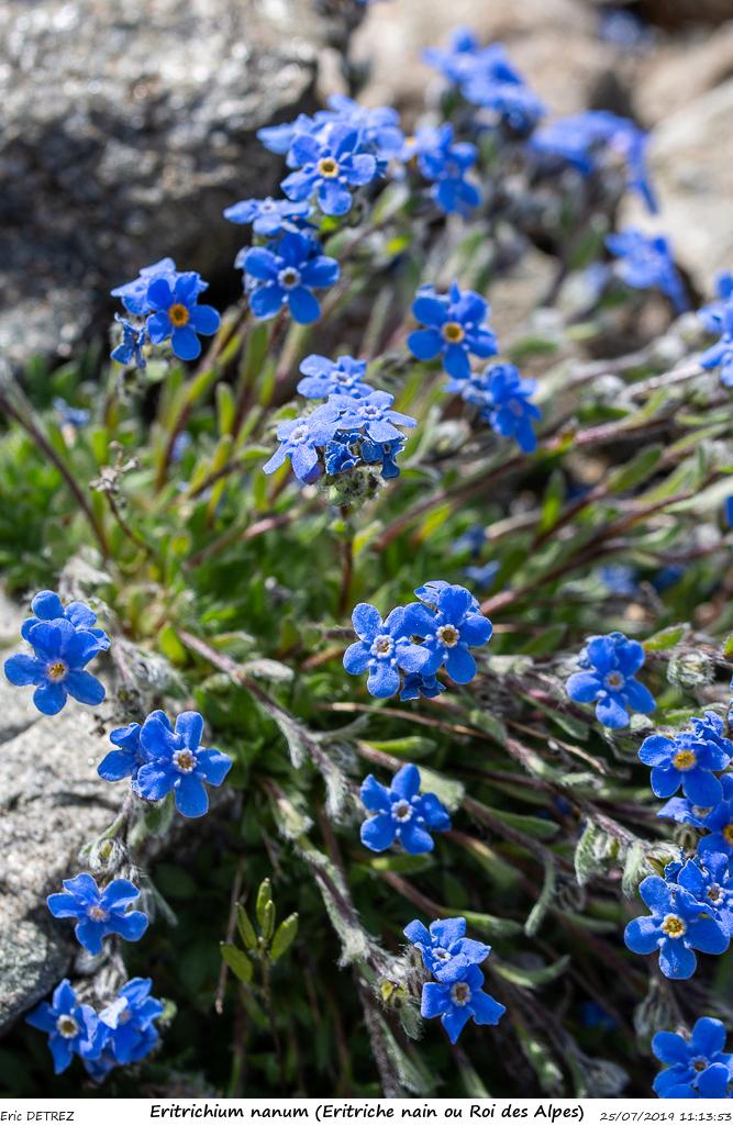 Huez entre flore et libellules Eritri15