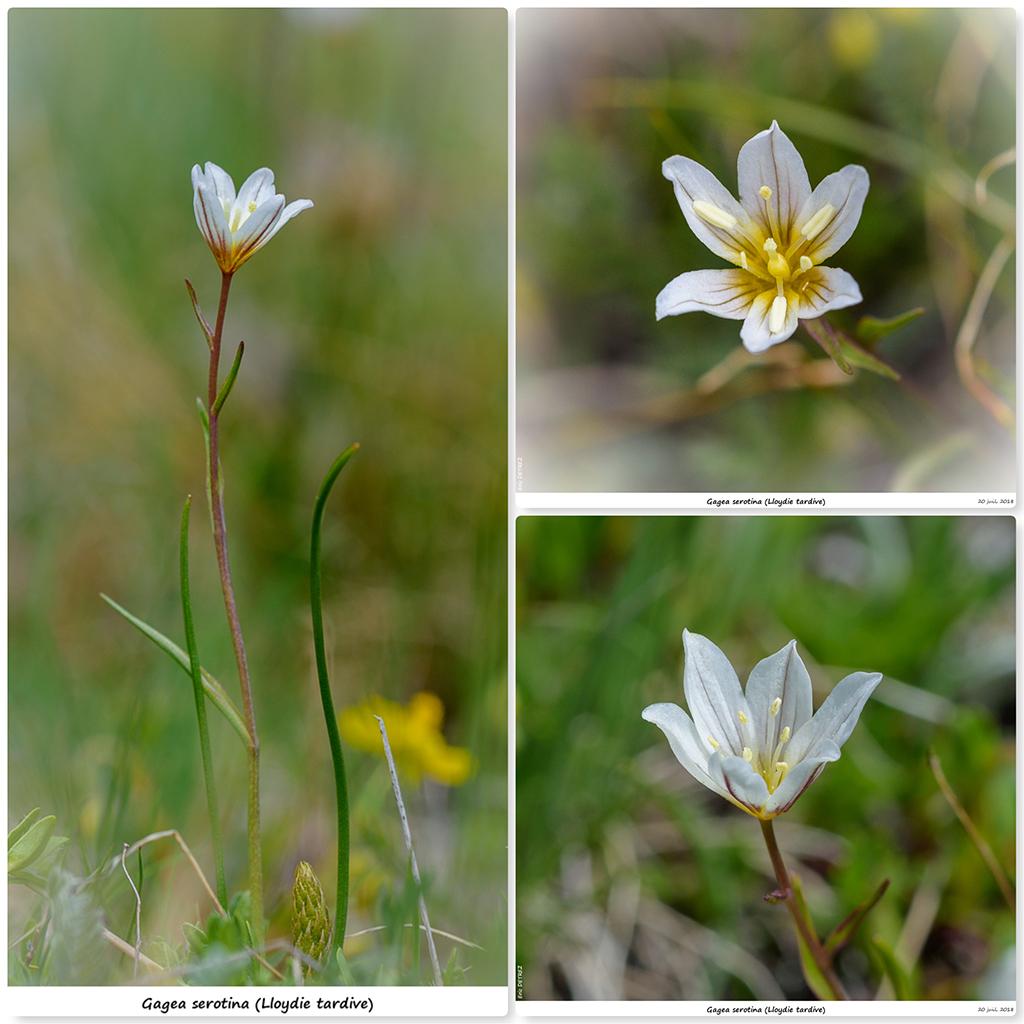 Retour sur 2018 et la flore alpine Gs110