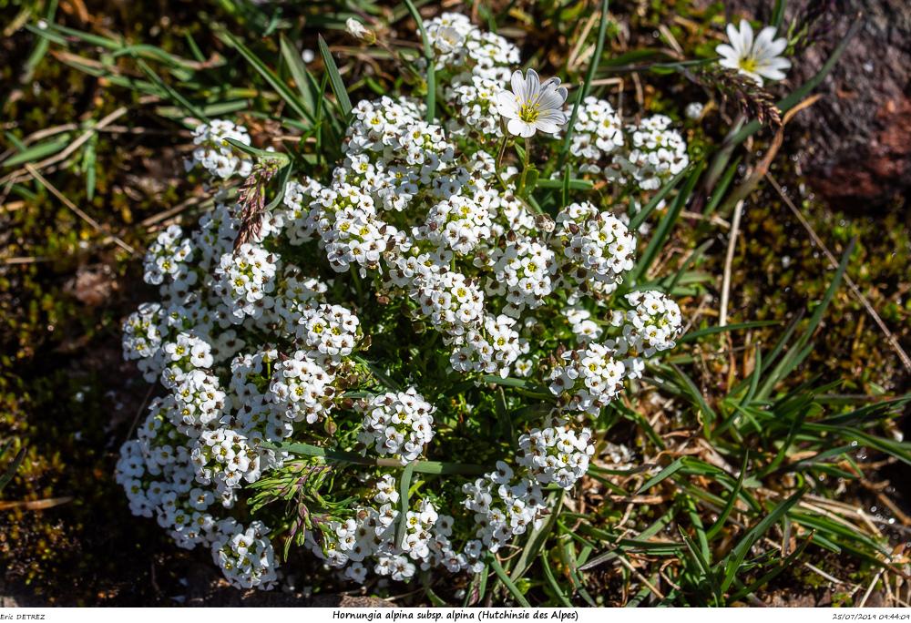 Huez entre flore et libellules Hornun10