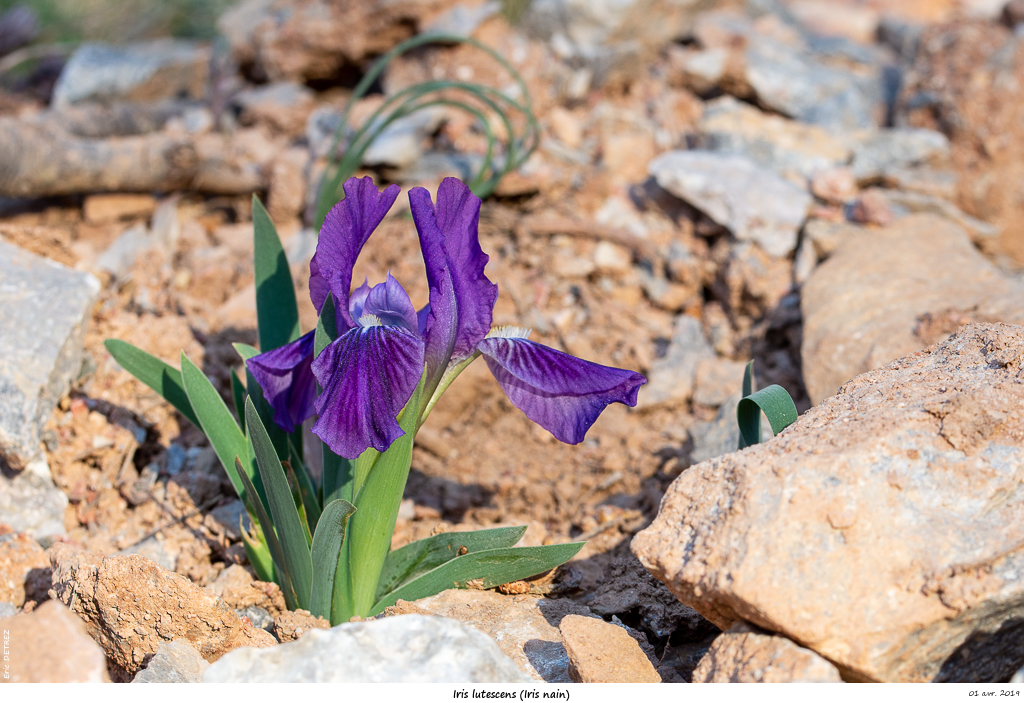 Aude et Ariège terres de contrastes Iris_l10