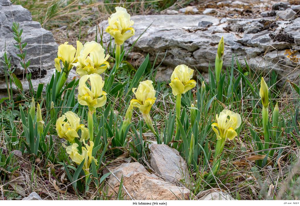 Aude et Ariège terres de contrastes Iris_l11