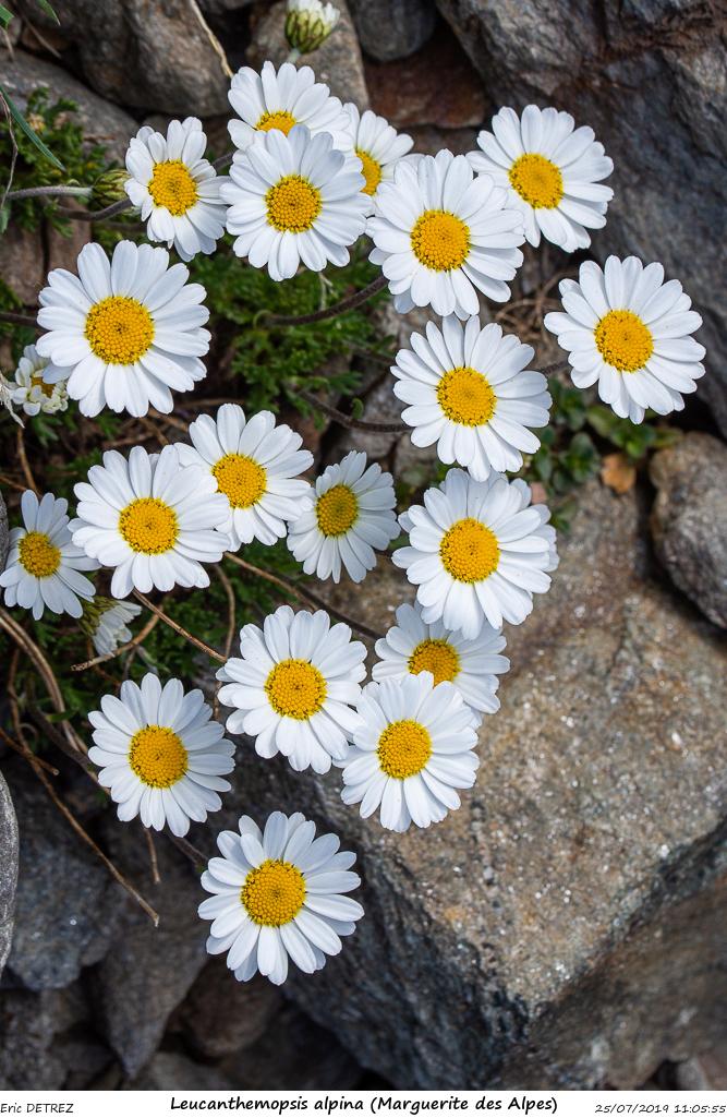 Huez entre flore et libellules Leucan10