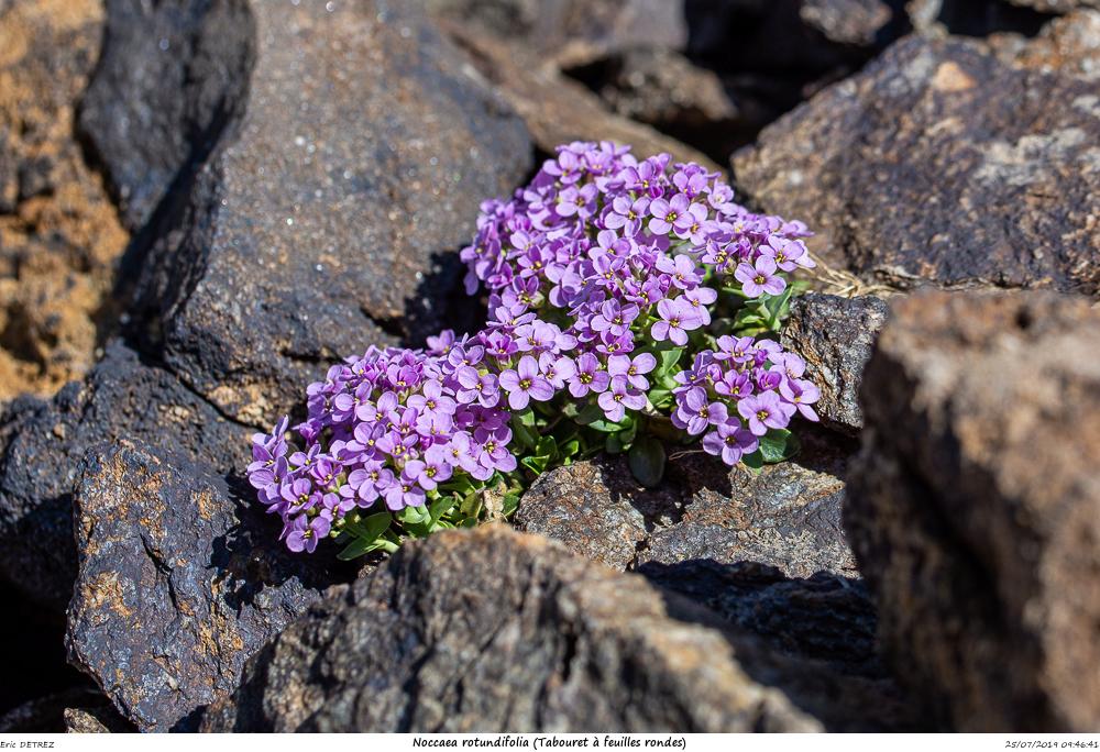 Huez entre flore et libellules Noccae10