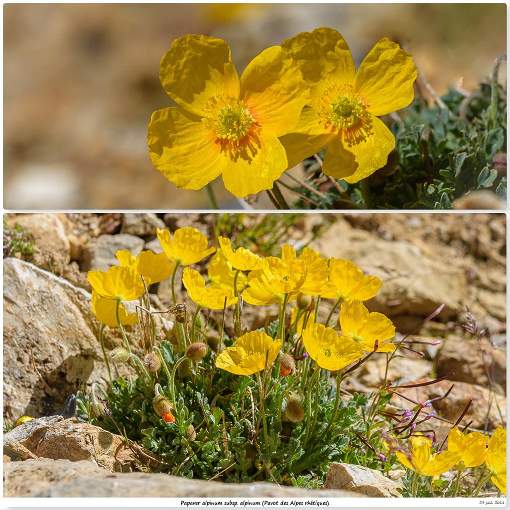 Retour sur 2018 et la flore alpine Pa112