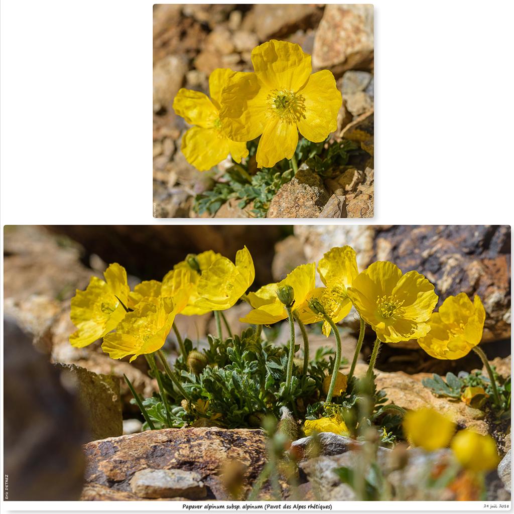 Retour sur 2018 et la flore alpine Pa211