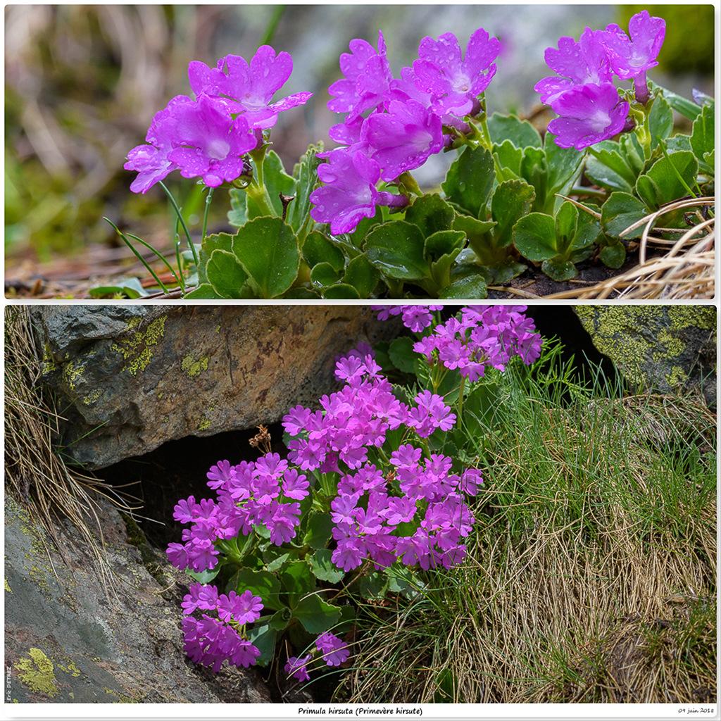 Retour sur 2018 et la flore alpine Ph11