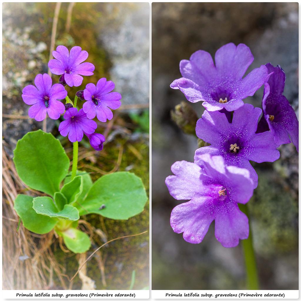 Retour sur 2018 et la flore alpine Pl11