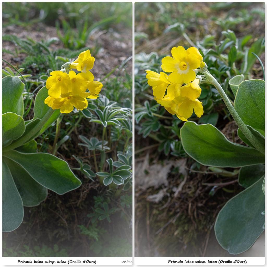 Retour sur 2018 et la flore alpine Plu10