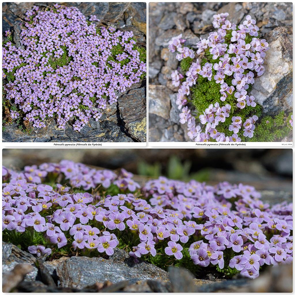 Retour sur 2018 et la flore alpine Pp13