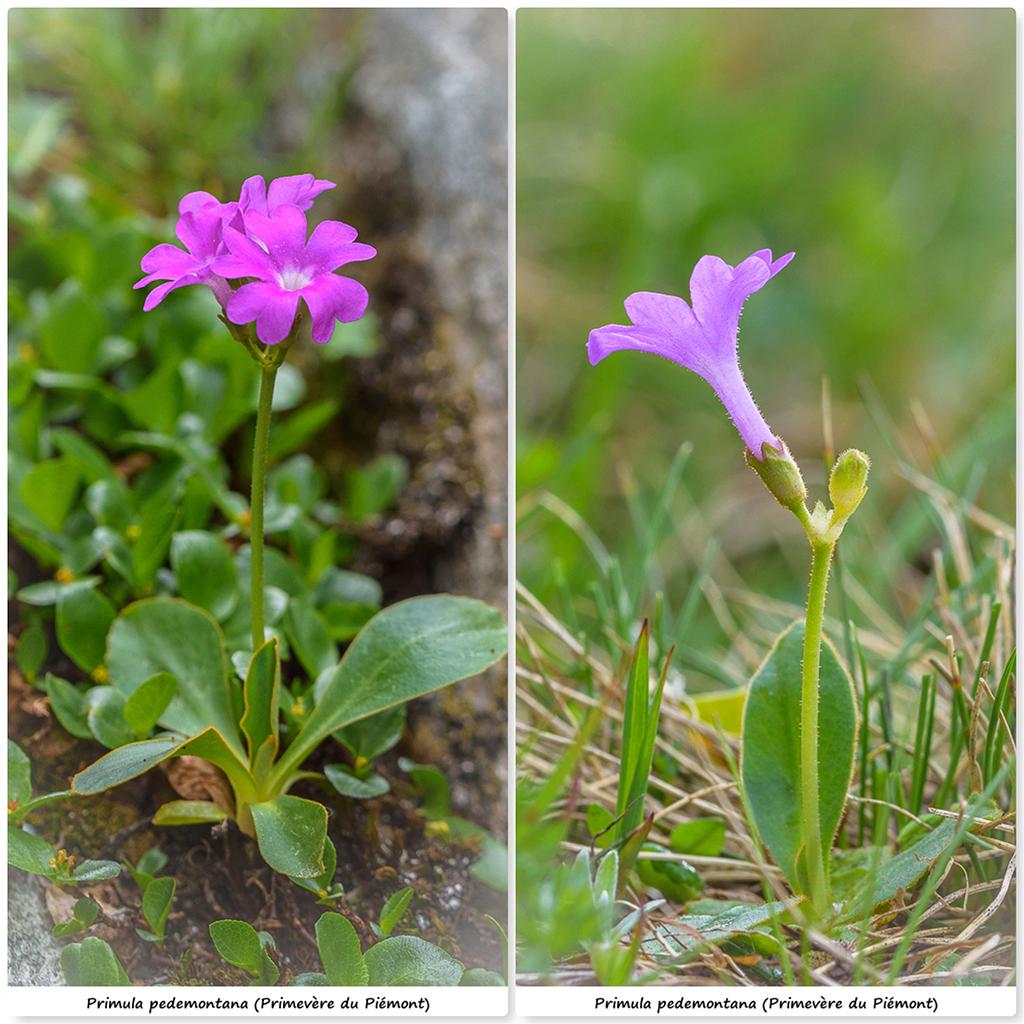 Retour sur 2018 et la flore alpine Ppm10
