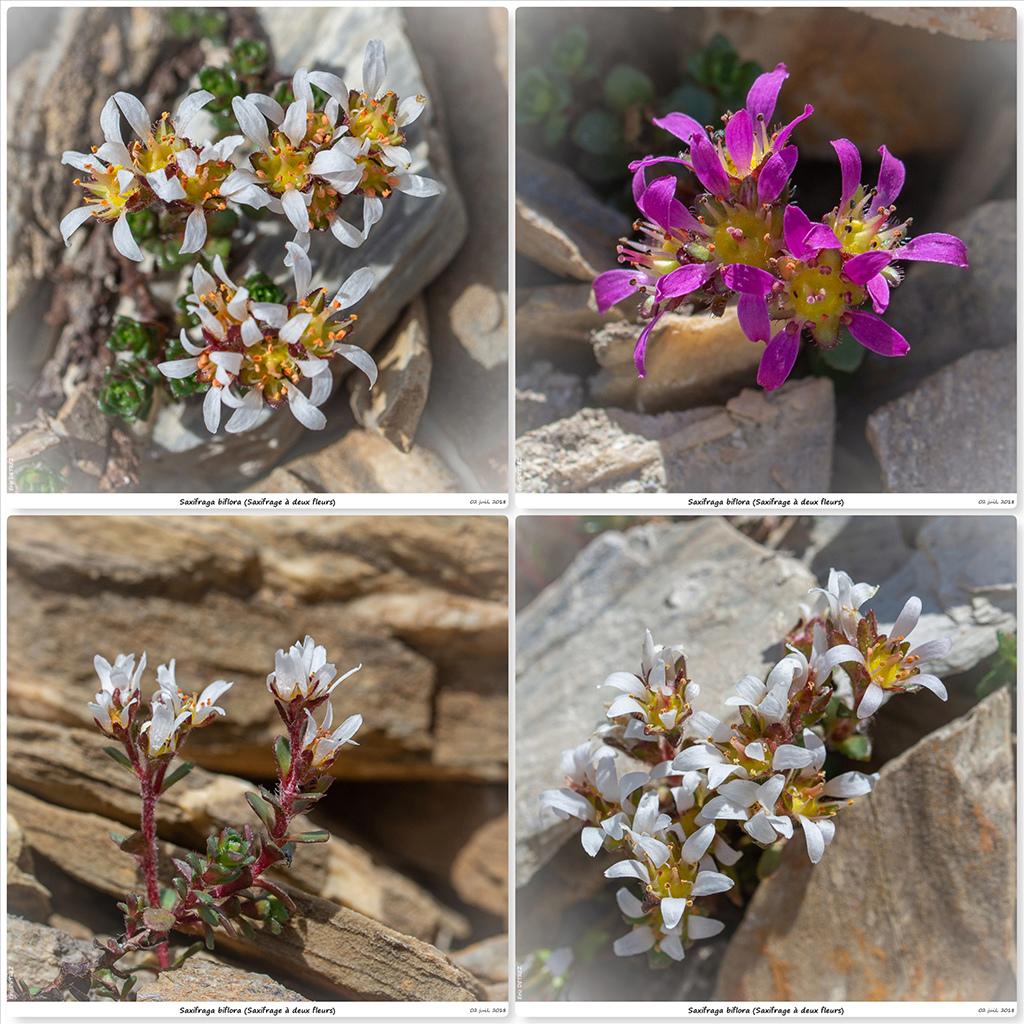 Retour sur 2018 et la flore alpine Sb12