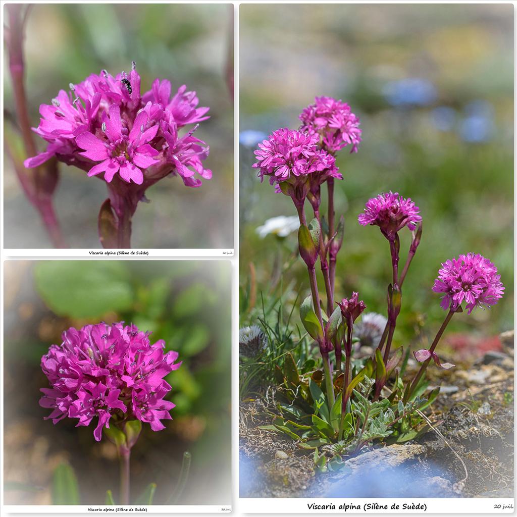 Retour sur 2018 et la flore alpine Si10