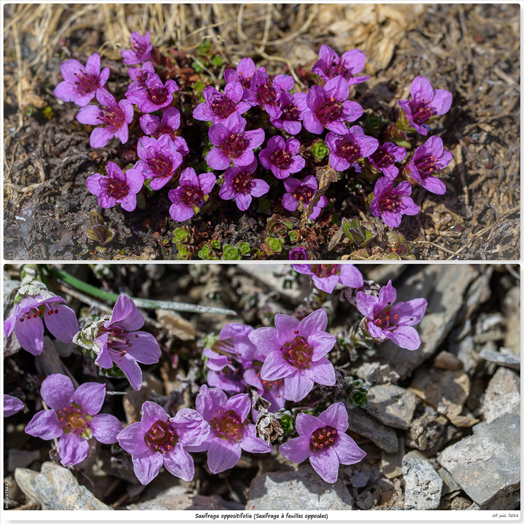 Retour sur 2018 et la flore alpine So10