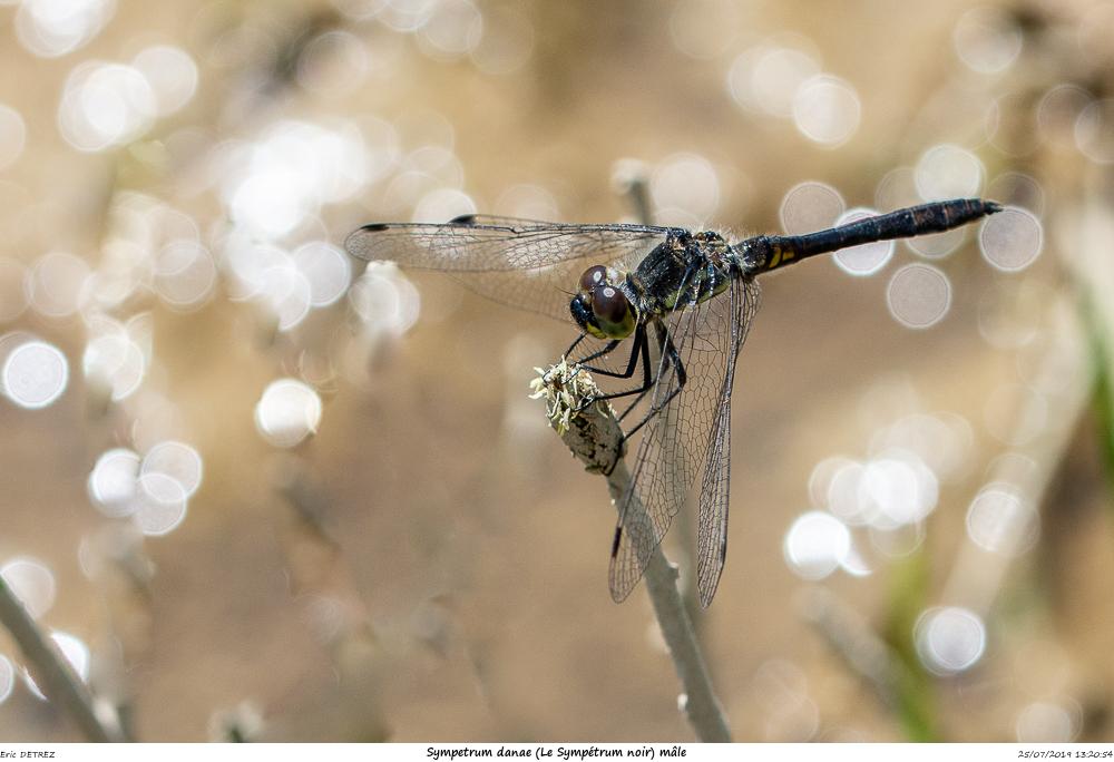 Huez entre flore et libellules Sympet21