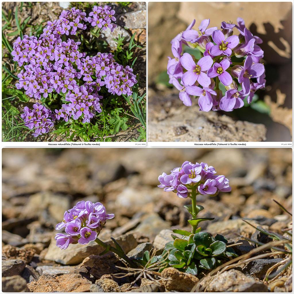 Retour sur 2018 et la flore alpine Tb10