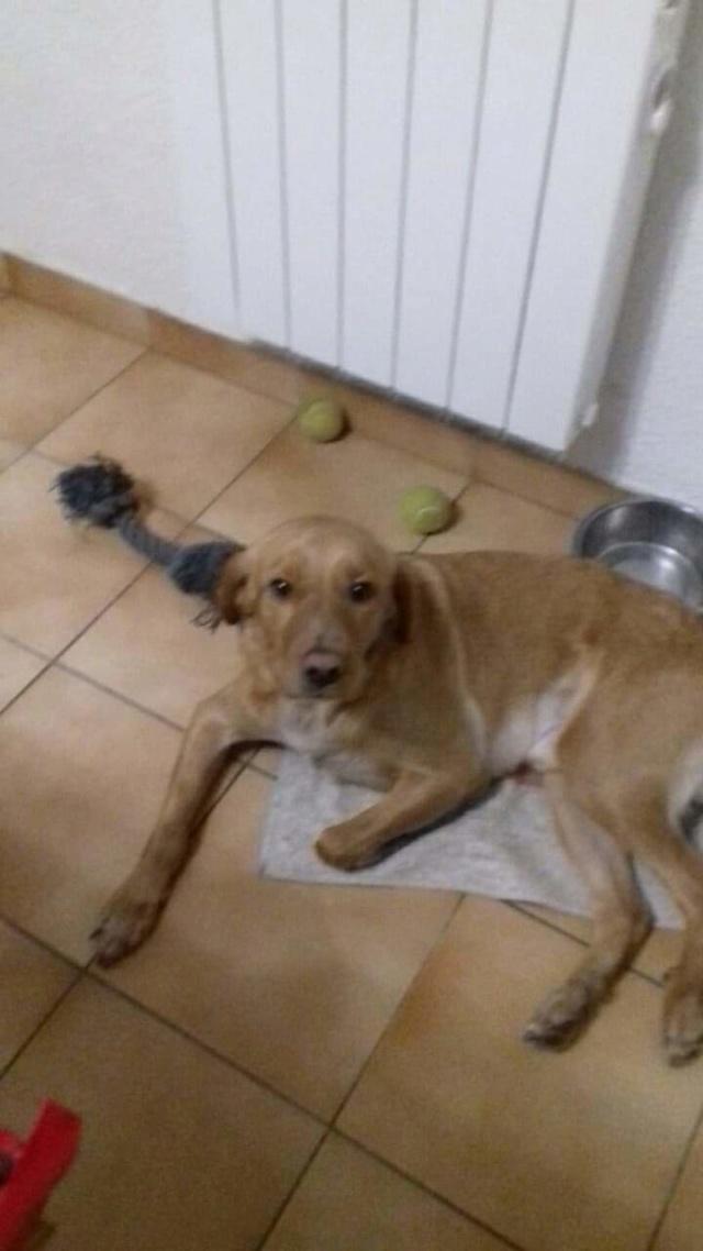 roucky - ROUCKY - né le 01/09/2017 - abandonné par sa famille (en FA dans le 38)-R-30MA-SOS Img-2030