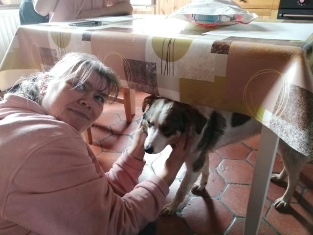 NUGGETS -  né 15/04/2018 (chiot de Wally) - marrainé par Patricia  en FA chez Nancy en Belgique -R-SOS - Page 2 Img-2100