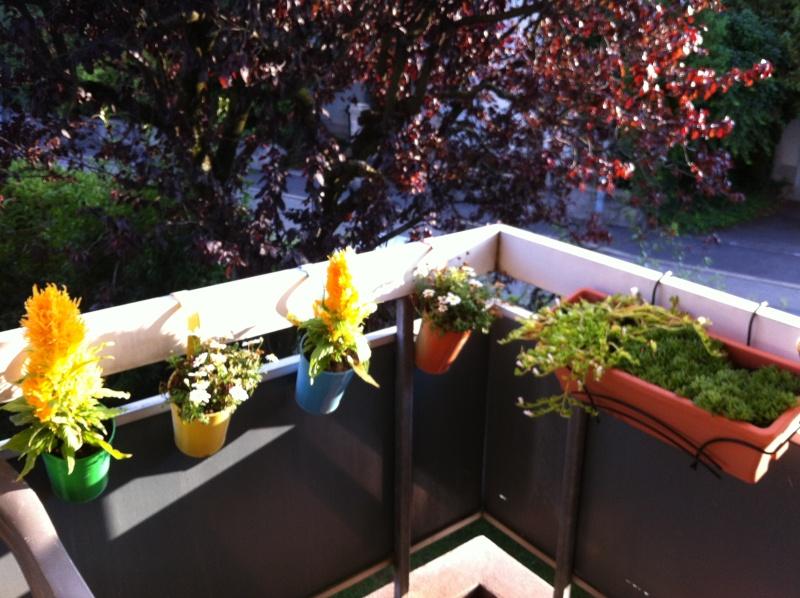 Voici mon balcon 2012-015