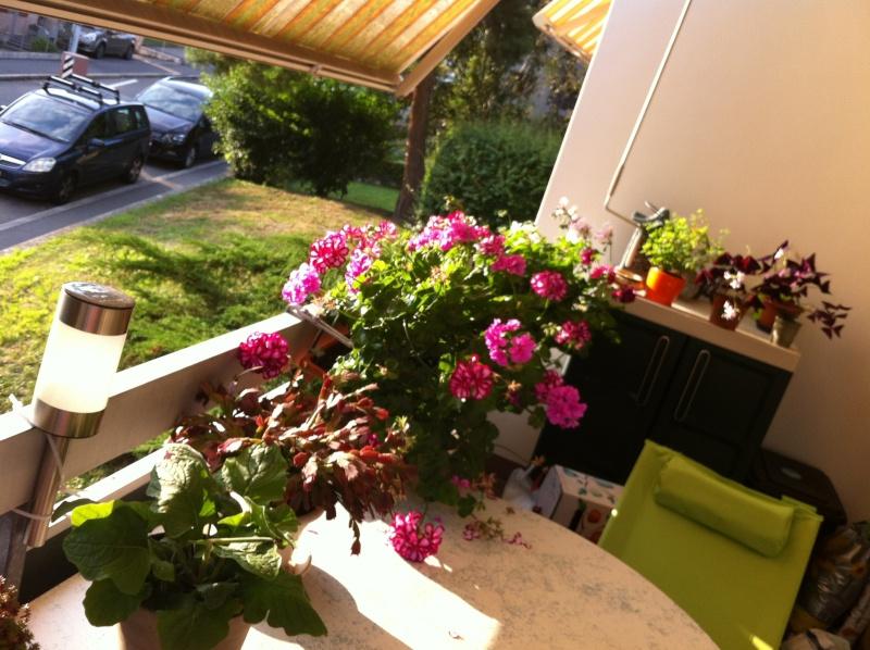 Voici mon balcon 2012-017