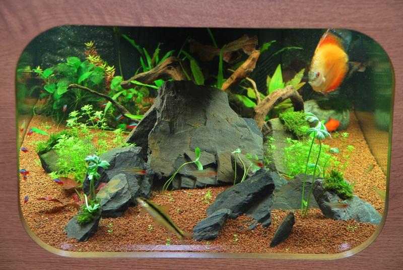 aquarium table basse (nouvel hardscape) - Page 2 Dsc_0810