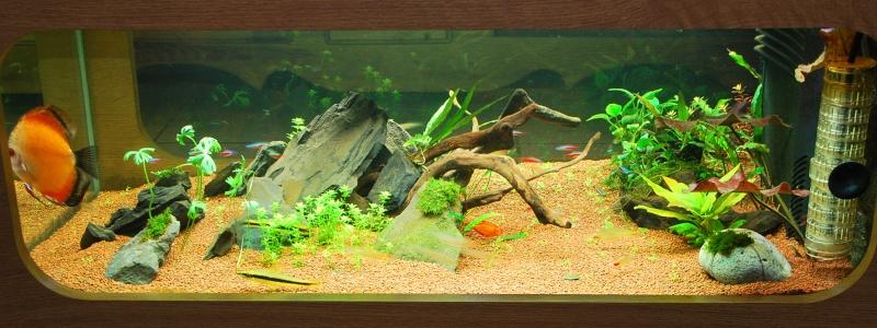 aquarium table basse (nouvel hardscape) - Page 2 Dsc_0811