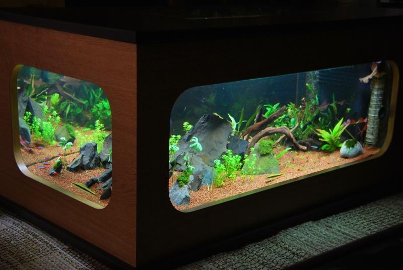 aquarium table basse (nouvel hardscape) - Page 2 Dsc_0812