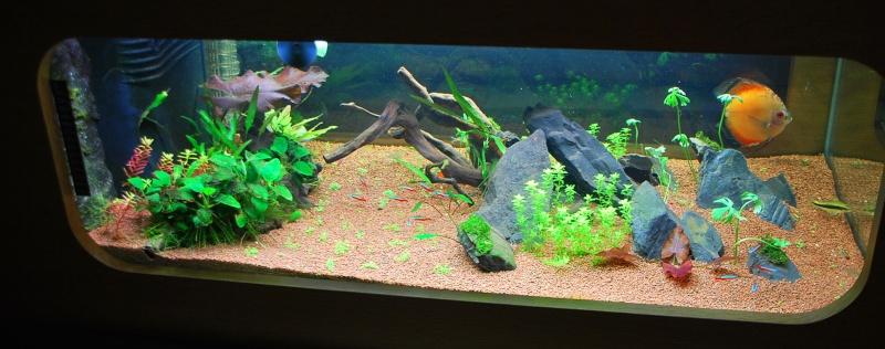 aquarium table basse (nouvel hardscape) - Page 2 Dsc_0813