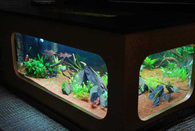 aquarium table basse (nouvel hardscape) - Page 2 Dsc_0814