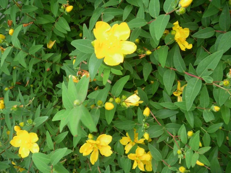 [Challenge] Identification de plantes sauvages avec votre guide 00111