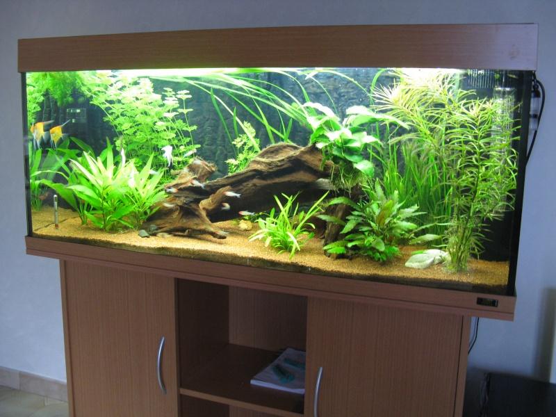 Aquarium amazonien 272L brut (rio 240) Img_2310