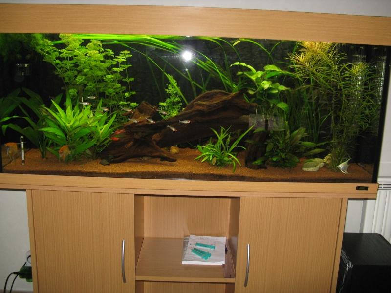 Aquarium amazonien 272L brut (rio 240) Img_2311