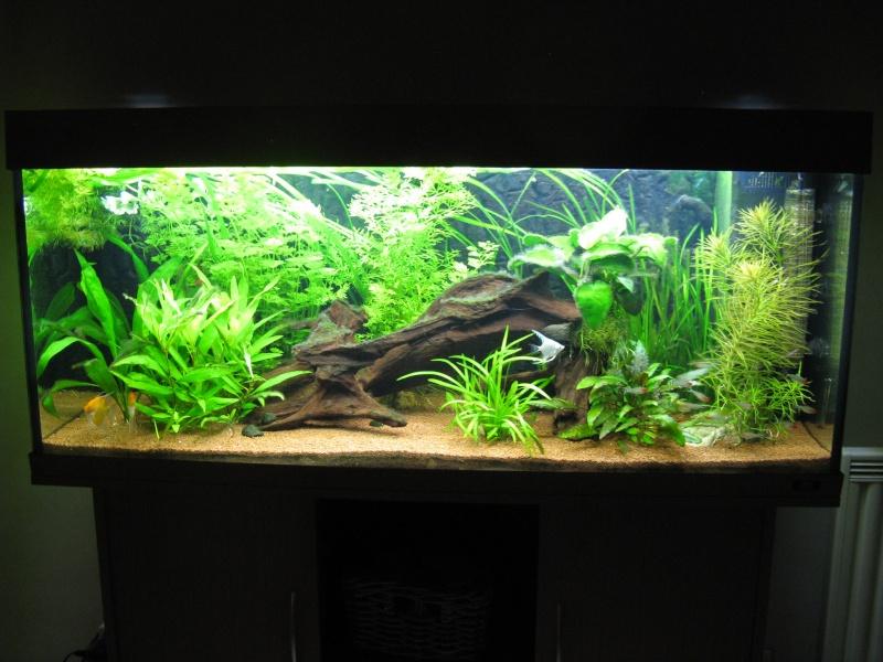 Aquarium amazonien 272L brut (rio 240) Img_2312
