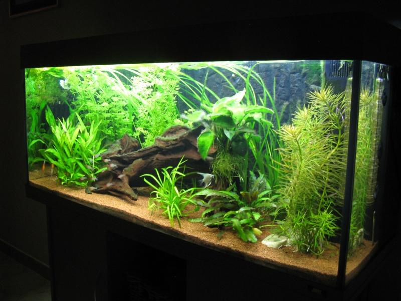 Aquarium amazonien 272L brut (rio 240) Img_2313