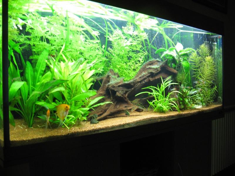 Aquarium amazonien 272L brut (rio 240) Img_2314