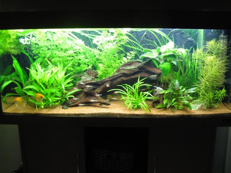 Aquarium amazonien 272L brut (rio 240) Img_2315