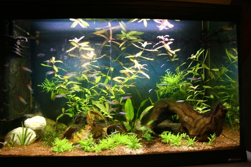 aquarium 120L amazonien... Photo_10
