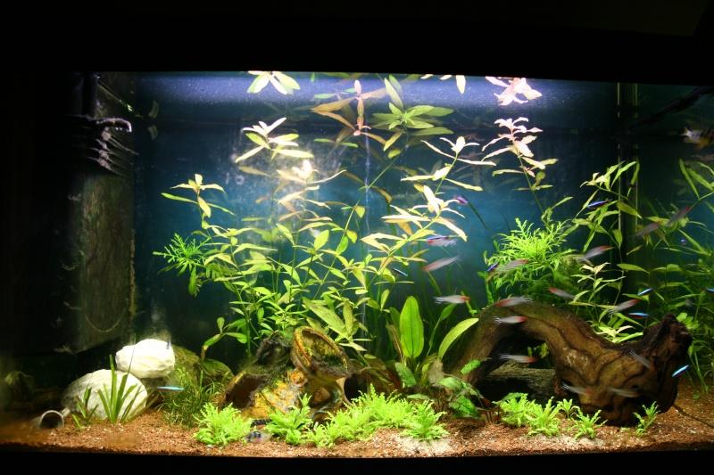aquarium 120L amazonien... Photo_11
