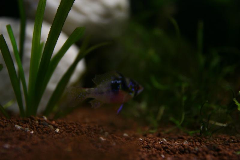 aquarium 120L amazonien... Photo_12