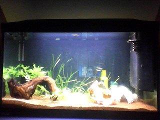 aquarium 120L amazonien... Snapsh11