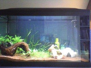 aquarium 120L amazonien... Snapsh12