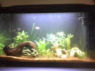 aquarium 120L amazonien... Snapsh17