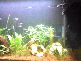 aquarium 120L amazonien... Snapsh18